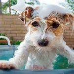 Según los expertos ¿Cada cuánto debes de bañar a tu perro?