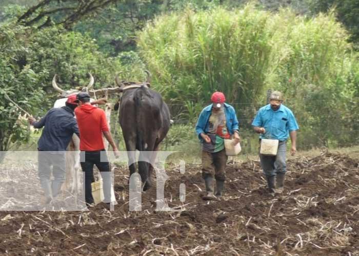 Arado de la tierra en Estelí