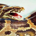 Niña es mordida por una serpiente venenosa en un zoológico, Rusia
