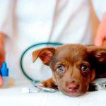 ¡Aberrado sexual! Veterinario tras la reja por abusar de perros y grabarse