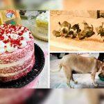 argentina, perros, pasteles,