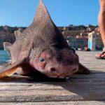 Cuerpo de tiburón y cabeza de cerdo: el extraño pez hallado en Italia