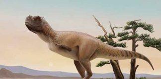 Paleontólogos encuentran nueva especie de dinosaurio carnívoro en Brasil