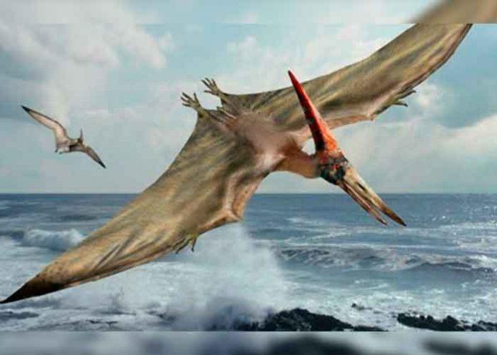 Científicos chilenos hallan fósil de dragón volador prehistórico