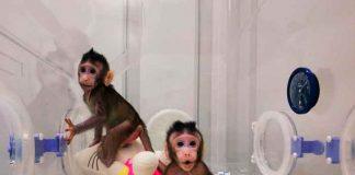 Estudio: Un gen de monos y ratones interfiere con el VIH y el ébola