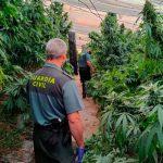 Incautan 9 mil 700 plantas de marihuana en un invernadero de Granada, España