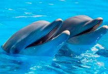 Insólito: Mujer admite que se enamoró y tuvo sexo con un delfín