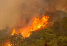 Un bombero muerto y 800 evacuados por incendio en sur de España