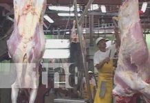 Matadero en Estelí con el cual se exporta carne al extranjero