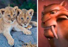 ¡Impresionante! Encuentran dos cachorros de leones de la era de hielo