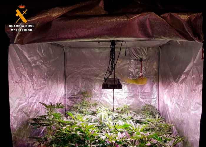 Plantación de marihuana en una casa de un policía
