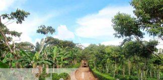 Reparan caminos rurales de cara a la temporada cafetalera en Jinotega