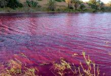 Cómo en la plagas de Egipto un río se vuelve color 'sangre' en Jordania