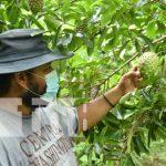 Exitoso productor nagaroteño de Rancho Pando aporta a economía local