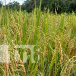 Reunión de productores en Río San Juan por semillas mejoradas