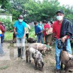 Entregan cerdas para fortalecer la producción porcina en Tipitapa
