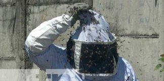 Bomberos trabajaron varias horas exterminado un enjambre de abejas en Managua