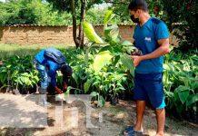 Entrega de in vitro de plátanos a productores de Ciudad Antigua