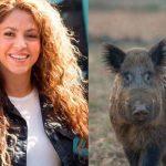 Shakira y su hijo fueron atacados por jabalíes en un parque de Barcelona