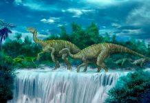 Paleontólogos descubren nueva especie de dinosaurio vegetariano en Australia