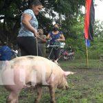 Recibimiento de Bonos de cerdas porcinas para mejorar la producción