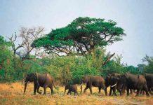 Un elefante mata a un presunto cazador furtivo en Sudáfrica