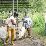Cerdas reproductoras para familias en Estelí
