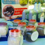 Congreso para exponer las ventajas del marango para la seguridad alimentaria