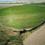 Desmantelan en Toledo, España la mayor plantación de marihuana