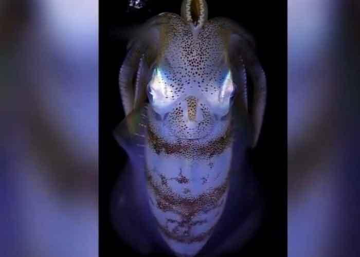 ¡Increíble! Capturan extraña criatura marina que parece 'de otro planeta'